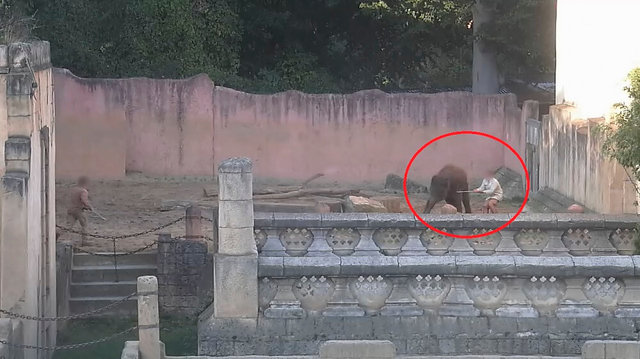 Reportagem Revela Tortura De Elefantes Bebés Em Zoo Na Alemanha 2