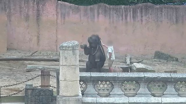Reportagem Revela Tortura De Elefantes Bebés Em Zoo Na Alemanha 3