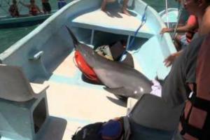 Golfinho Surpreende Turistas e Salta Do Mar Para Dentro Do Barco 9