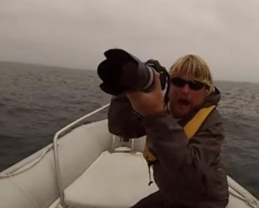 Tripulação Passa Por Momento Assustador Depois De Baleias Virarem Barco 3