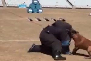Incrível Exibição Mostra Porque Nunca Se Deve Tentar Fugir De Um Cão Polícia 8