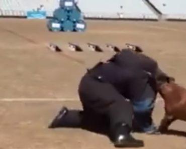 Incrível Exibição Mostra Porque Nunca Se Deve Tentar Fugir De Um Cão Polícia 3