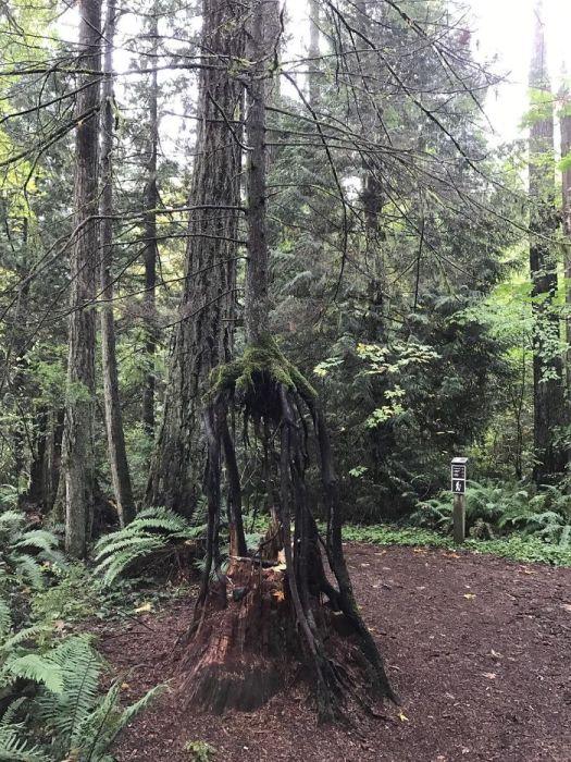 20 Árvores Que Passaram Por Cima De Tudo Para Se Manterem Vivas 2