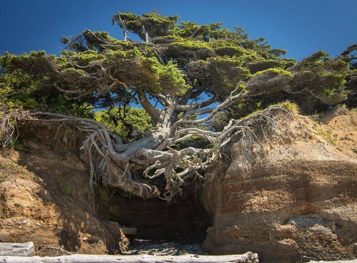 20 Árvores Que Passaram Por Cima De Tudo Para Se Manterem Vivas 11