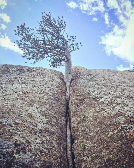 20 Árvores Que Passaram Por Cima De Tudo Para Se Manterem Vivas 12