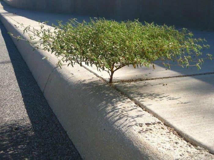 20 Árvores Que Passaram Por Cima De Tudo Para Se Manterem Vivas 13