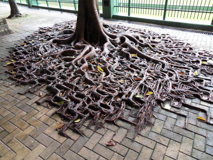 20 Árvores Que Passaram Por Cima De Tudo Para Se Manterem Vivas 14