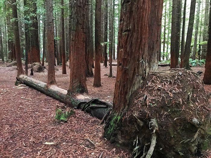 20 Árvores Que Passaram Por Cima De Tudo Para Se Manterem Vivas 15
