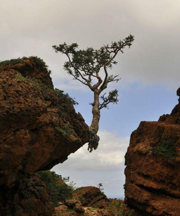 20 Árvores Que Passaram Por Cima De Tudo Para Se Manterem Vivas 3