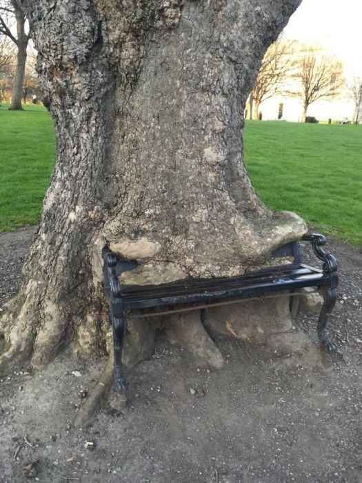 20 Árvores Que Passaram Por Cima De Tudo Para Se Manterem Vivas 5