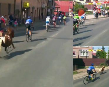 Pónei Tenta Ganhar Etapa Da Volta à Polónia Em Bicicleta 6