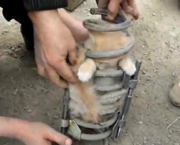 Gato Preso Em Mola Da Suspensão De Um Carro Resgatado Na Rússia 7