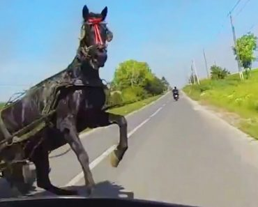 Momento Tenso Em Que Motociclista Quase Embate Em Cavalo 6