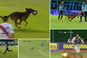 Cão Polícia Invade Terreno De Jogo e Rouba a Bola Em Jogo De Futebol 10