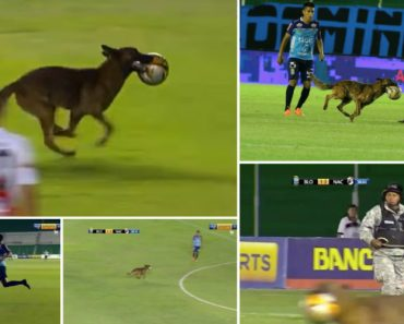 Cão Polícia Invade Terreno De Jogo e Rouba a Bola Em Jogo De Futebol 4
