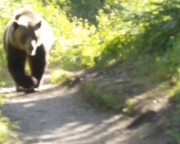 Amigos Tentam Manter a Calma Enquanto São Perseguidos Por Urso 6