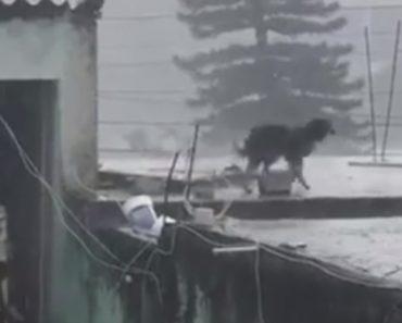 Chovia Torrencialmente e Abandonaram Cão Preso No Telhado 9