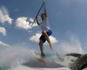 Paddle Boarder Tem Surpresa Da Sua Vida Ao Encontrar Tubarão 8