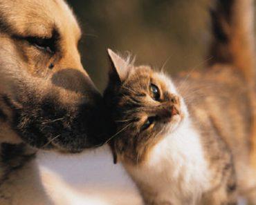 Conheça o Easy TV, Um Canal Com Programação Exclusiva Para Cães e Gatos 1