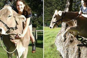 Jovem Aprende a Montar Vacas Depois Dos Seus Pais Se Recusarem a Oferecer-lhe Um Cavalo 10