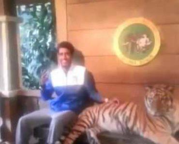 Quando a Vontade De Tirar Uma Foto Com Um Tigre é Maior Que a Coragem 1