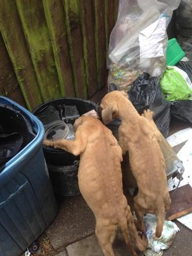 """Mulher Deixa Cachorros à Fome Em Quintal Com Lixo Por Não a """"Deixarem Dormir"""" 2"""