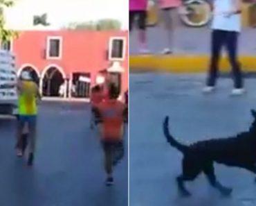 Atleta Agride Cão Em Plena Maratona e Indigna a Redes Sociais 5