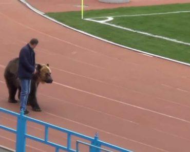 Jogo Da 3.ª Divisão Russa Teve Direito a Um Urso... No Estádio 1