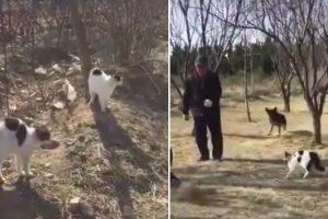 Homem e Cão São Derrotados Por Grupo De Gatos 9
