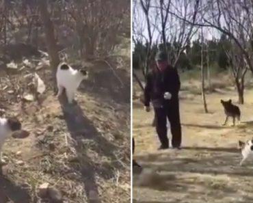 Homem e Cão São Derrotados Por Grupo De Gatos 5