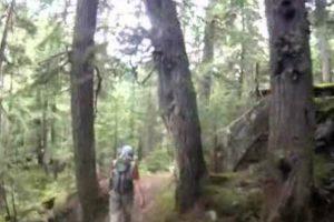 Homem Tem Encontro Indesejado Enquanto Fazia Corrida No Bosque 9