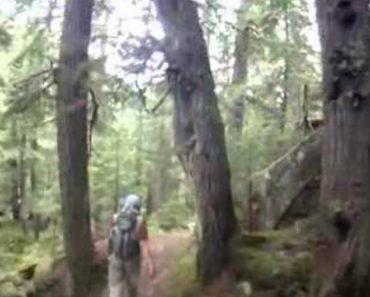 Homem Tem Encontro Indesejado Enquanto Fazia Corrida No Bosque 3