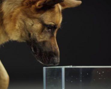 Ultra Câmara Lenta Mostra Algo Verdadeiramente Fascinante Sobre Cães 2