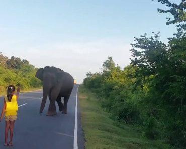 Menina Aproxima-se De Elefante Selvagem Consegue Afastá-lo Sem Sequer Lhe Tocar 5