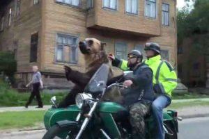 Só Na Rússia é Que Se Poderia Ver Um Urso a Andar De Moto 8