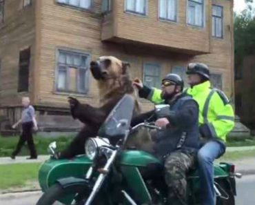 Só Na Rússia é Que Se Poderia Ver Um Urso a Andar De Moto 1