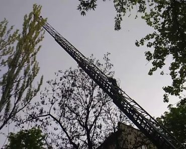 """Moradores Chamam Bombeiros Para Tirar Gato De Árvore Mas Resgate Foi """"Ligeiramente"""" Diferente Do Que Esperavam 6"""