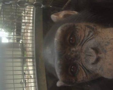 Macaco Rouba Câmara GoPro a Turista e Tira Uma Selfie 3