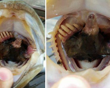 Pescador Tem Surpresa Após Apanhar Peixe Com Toupeira Dentro Da Boca 7