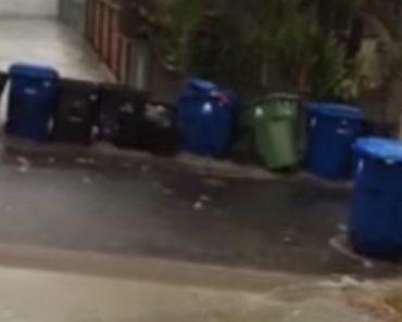 Aquela Altura Do Ano Em Que Todos Os Caixotes Do Lixo De Uma Localidade Resolvem Ir De Férias 8