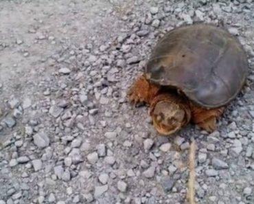 Jovem Resolve Atormentar Uma Tartaruga Mas Arrepende-se Amargamente Por Isso 4
