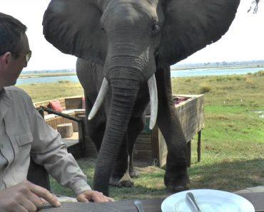 Turistas Recebem Surpresa Indesejada De Elefante Durante Refeição 3
