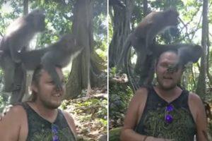 Macacos Apoiam-se No Ombro De Turista Para Acasalarem 9