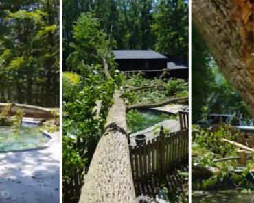 Corte De Enorme Árvore Termina De Forma Desastrosa 5