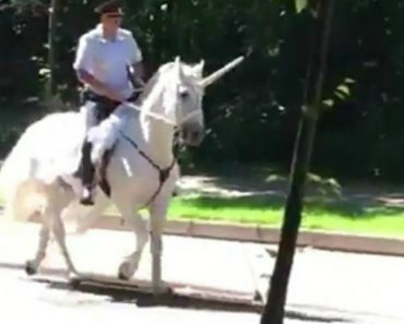 Polícia é Visto a Patrulhar Rua Enquanto Cavalga No Seu Unicórnio 8
