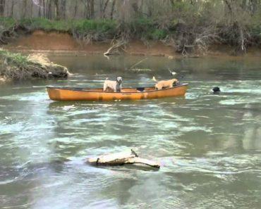 Cão Salva Outros Dois Cães Presos Num Barco a Ser Arrastado Pela Corrente 7