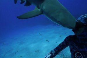 Tubarão Ataca Mergulhador à Cabeçada! 7
