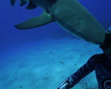 Tubarão Ataca Mergulhador à Cabeçada! 5