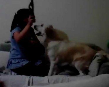 """Cães Protegem Criança De Ser """"Agredida"""" Pela Mãe 6"""