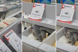 Gato é Visto a Dar Tratamento Especial Ao Açúcar De Supermercado 9